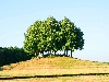 Bild bn-2003-fg-0007.jpg anzeigen.